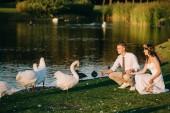 glückliches junges Hochzeitspaar füttert Schwäne im Park