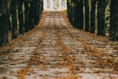 pohled prázdný podzimní park s hnědé listy na cesty