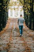 Photo back view of man walking with siberian husky dog in autumn park