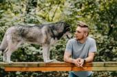 husky, kutya séta akadály a parkban a jóképű férfi
