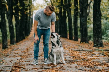 man with siberian husky dog in autumn park