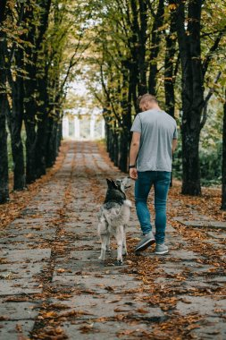 back view of young man walking with husky dog in autumn park