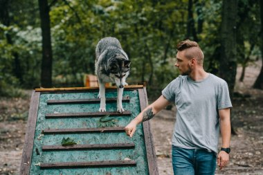 cynologist with husky on dog walk obstacle in agility trial