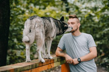 dog trainer with siberian husky on dog walk obstacle