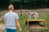 Photo young man training with siberian husky on dog walk obstacle
