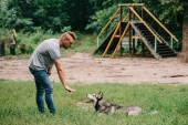 Photo cynologist and husky dog training lying command with hand gesture