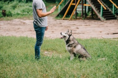 cropped view of man training command to sit with husky dog