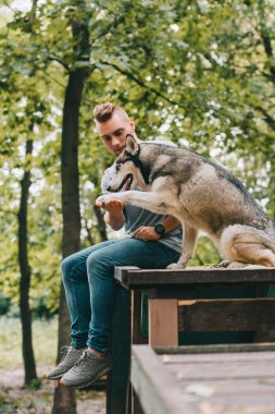 young man holding paw of husky dog in park