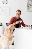 Arany-Vizsla ül kávét iszik üzletember