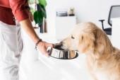 Fotografie süße golden Retriever Hund füttern Menschenbild beschnitten