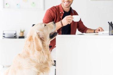 golden retriever dog sitting near smiling businessman drinking coffee