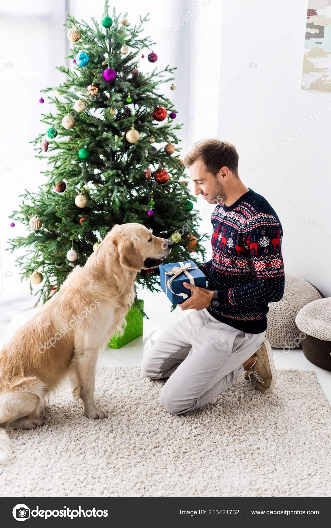Man Christmas Sweater Giving Gift Box Golden Retriever