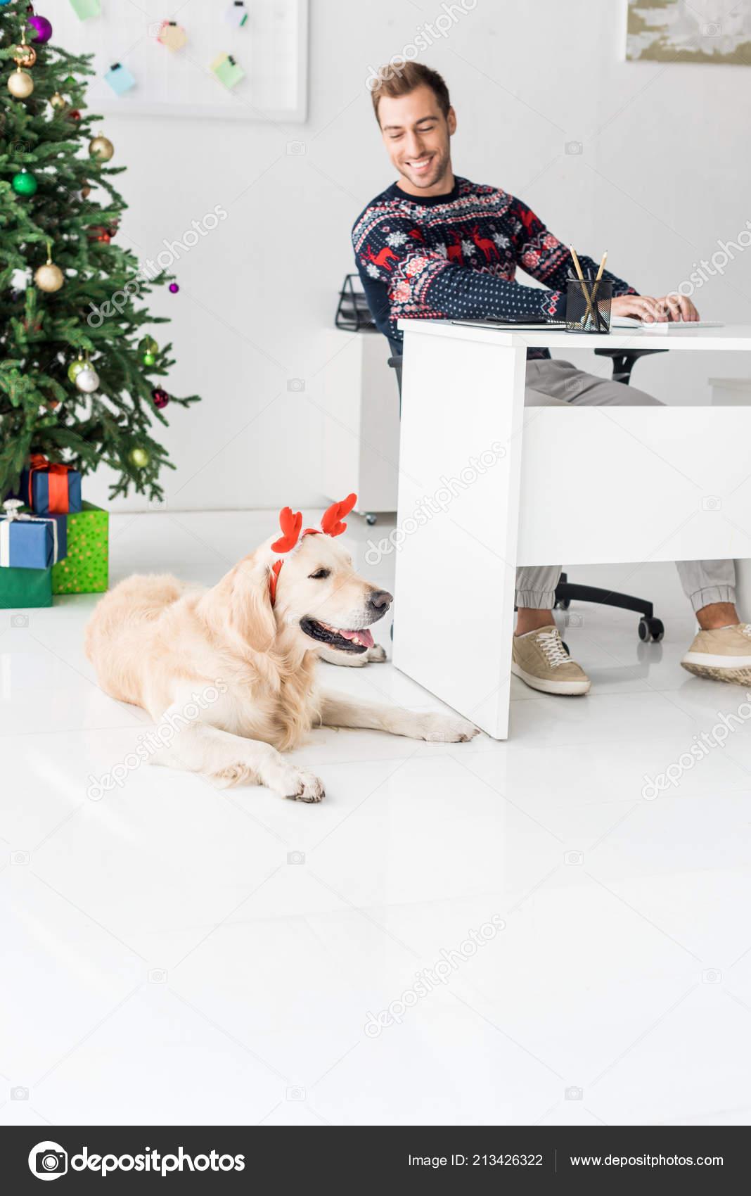 Kersttrui Hert.Glimlachende Man Kerst Trui Kijken Naar Golden Retriever Hert Horens