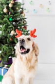 dog with red deer horns sitting next to christmas tree