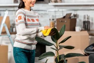 partial view of young woman wiping dust from potted plant by rag in kitchen with cardboard boxes at new home