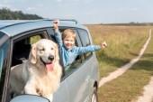 slaví malý jezdil vůz s jeho pes zlatý retrívr v poli