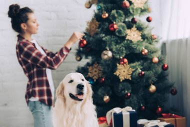 selective focus of golden retriever and woman decorating christmas tree behind at home
