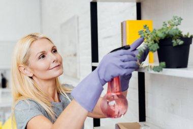 attractive mature woman in rubber gloves spraying green plant on rack
