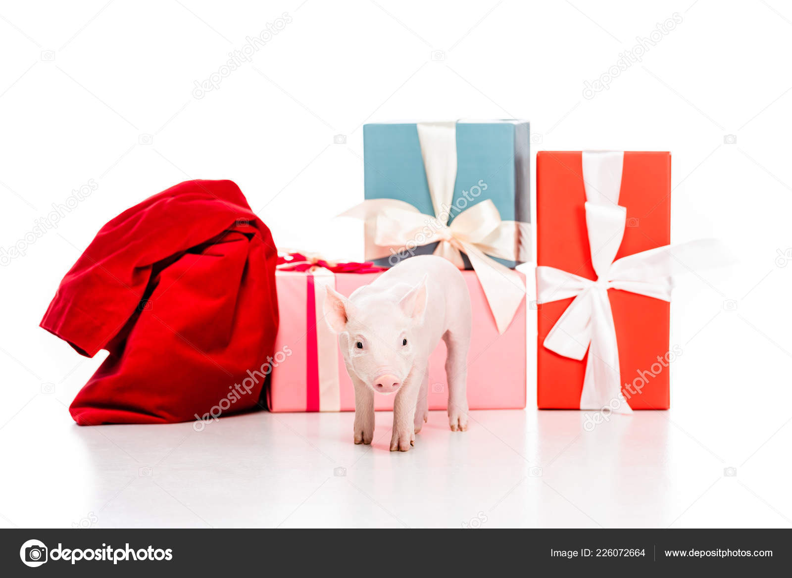 Cute Little Piglet Red Bag Christmas Gifts Isolated White — Stock ...