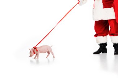 cropped shot of santa claus with leashed piggy isolated on white
