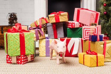 adorable little pig near christmas presents
