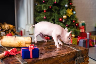 cute little pig on wooden chest at christmas time