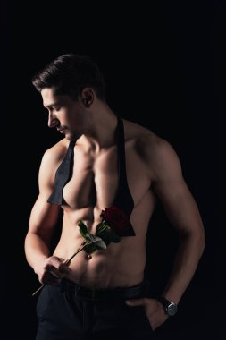 shirtless man holding red rose, posing and looking away isolated on black