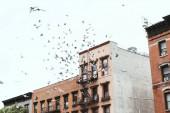 Fotografia scena urbana con uccelli che sorvolano buidings a new york, usa