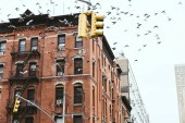 urban scene with birds flying over buidings in new york city, usa