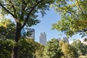 városi jelenet a Városligeti fák és felhőkarcolók, new York, Amerikai Egyesült Államok