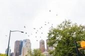 scena urbana con volo gli uccelli e gli alberi nel Parco della città e grattacieli di new york, Stati Uniti dAmerica