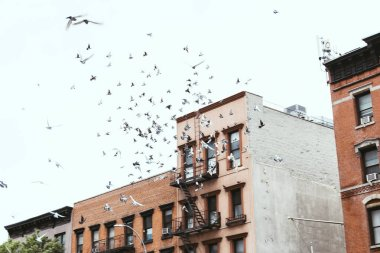 urban scene with birds flying over buidings in new york, usa