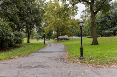 scenic view of city park with green trees in new york, usa