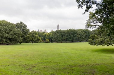 scenic view of green trees and grass in city park in new york, usa