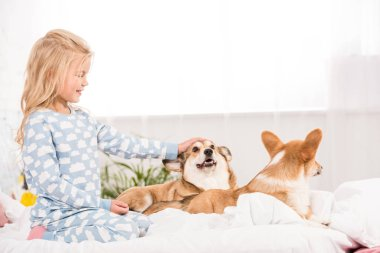 adorable smiling child in pajamas petting corgi dogs in bed