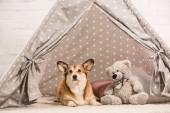 roztomilý welsh corgi pes ležící ve vigvamu s plyšovým medvědem doma