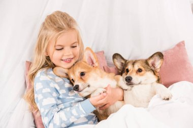 adorable child lying in bed and hugging pembroke welsh corgi dogs at home