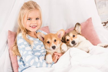 smiling child lying in bed with pembroke welsh corgi dogs and looking at camera