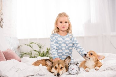 cute child sitting on bed with pembroke welsh corgi dogs and alarm clock while looking at camera