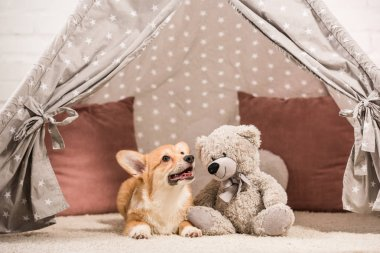Funny welsh corgi dog lying in wigwam with teddy bear at home stock vector