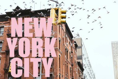 urban scene with birds flying over buildings with pink