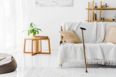 Photo modern living room with sofa, coffee table and walking cane
