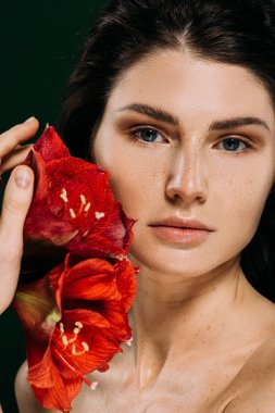 attractive young woman with freckles on face posing with red amaryllis flowers, isolated on green