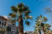 Fotografie city street with green palm trees and multicolored buildings, barcelona, spain