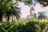 Fotografie tall green palm trees and bushes in parc de la ciutadella, barcelona, spain