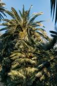 green lush palm trees in parc de la ciutadella, barcelona, spain