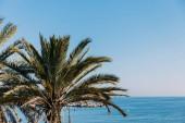 malebný pohled svěží plamové strom a modré moře, barcelona, Španělsko