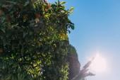 zelené stromy na pozadí modré oblohy s jasného slunečního světla, barcelona, Španělsko