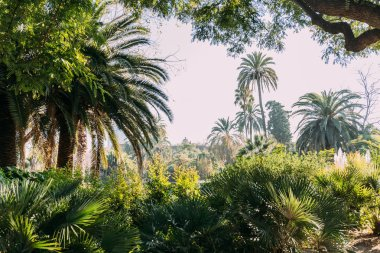 tall green palm trees and bushes in parc de la ciutadella, barcelona, spain