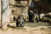 Photo chimpanzees and gorilla in zoological park, barcelona, spain